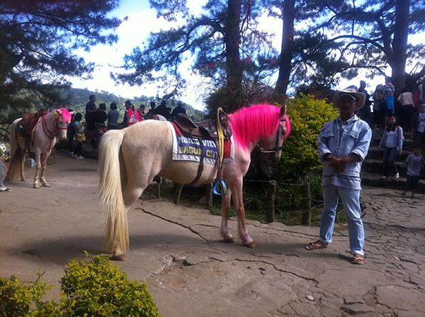 baguio-horse