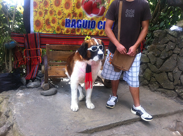 baguio-dog